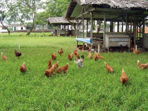 Cosa mangia il pollo che mangi alice midice - Cosa mangia un cucciolo di talpa ...